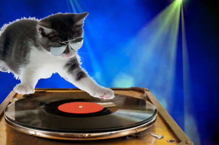 turntables: Kitten wearing sunglasses as dj scratching on the turntables. Stock Photo
