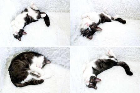 Cute cat sleeping in bed whit white bedding set  Kitten taking a nap  Curled up kitty at couch  Stock Photo - 15363253
