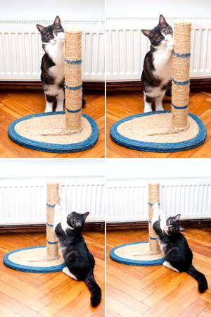 ハローキティ シャープ ロープ猫ポストを傷付けている猫爪猫猫のツリーを使用して爪を研ぐ 写真素材