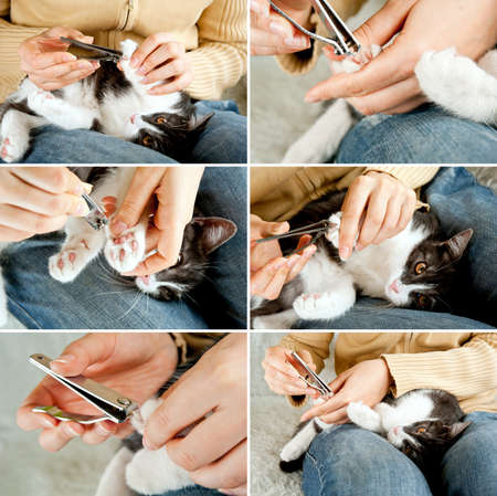Cutting off domestic cat s claws  Set of photos  Hand holding clippers  photo