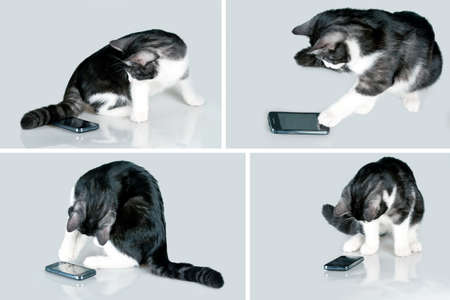 タッチ スクリーンのスマート フォンで遊ぶねこ
