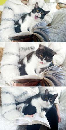 yawing: Gato con ojos marrones es libro de lectura Est� sentado en las rodillas y bostezos