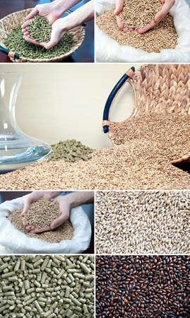 ビールの原料の大麦麦芽、ホップ、水醸造関連写真のセット