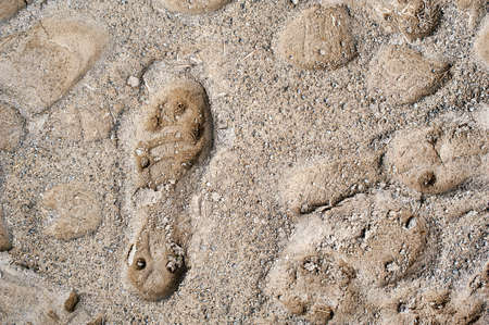football or rugby shoe print in dry mud  photo