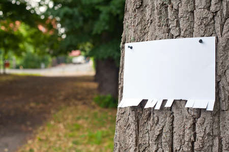Blank sheet of paper notice at the bark of tree  photo