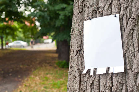 Pinned blank vertical paper label on a tree photo