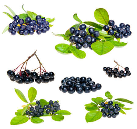 Isolated Aronia - Black Choke berry fruits  Separated pile of fruit, twig with leaves, and bunch