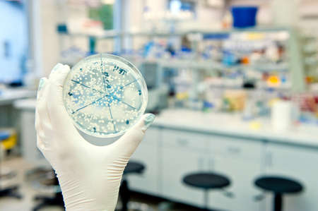 placa de Petri com  Banco de Imagens