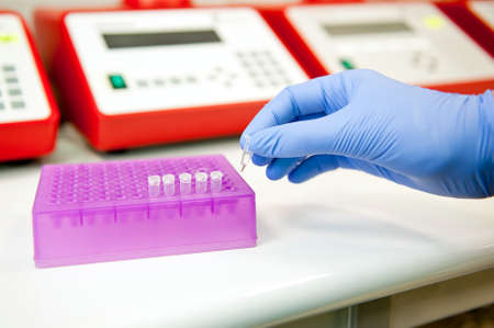 polymerase: Hand preparing polymerase chain reaction test tubes for analysis  Genetics laboratory