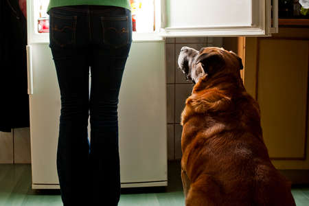 Hungry dog waiting for a dinner  Refrigerator emit bright light  Dog feeding time