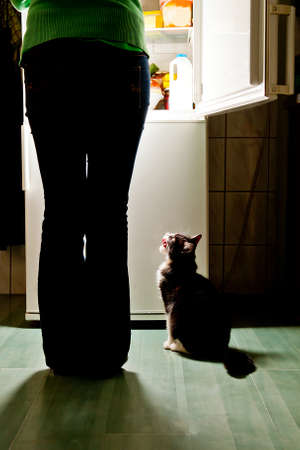 Hungry cat waiting for a meal and lick one s lips  refrigerator emit bright light  Dog feeding time  Stock Photo