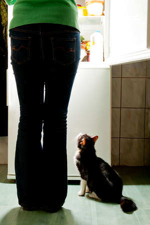 emit: Hungry cat waiting for a meal and lick one s lips  refrigerator emit bright light  Dog feeding time  Stock Photo