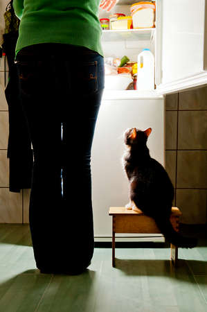 Hungry cat waiting for a meal  refrigerator emit bright light  cat feeding time