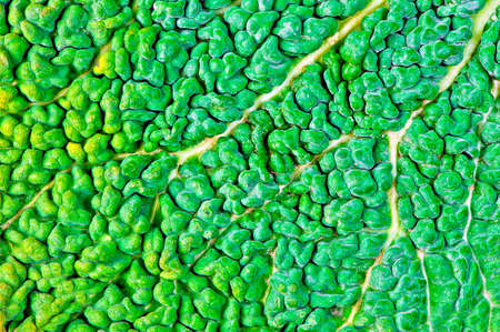 roughage: texture of green kale leaf surface Stock Photo