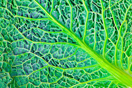 green kale leaf surface Banco de Imagens