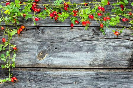 wild rose frame at bark boards photo