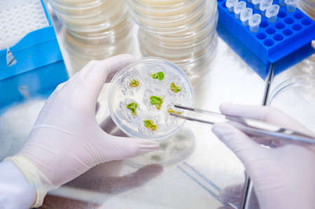 genetic research on plants culture