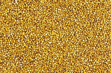 sorgo: fondo hecho de semillas de sorgo