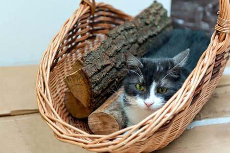 log basket: Cat sitting in wicker basket with logs of wood.