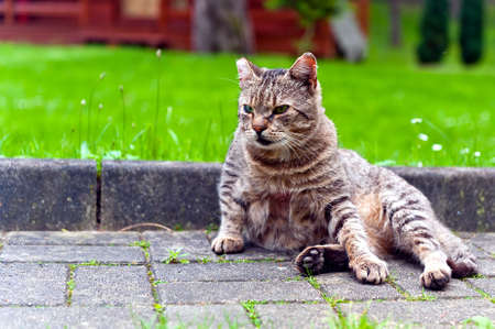 Cat sitting on paved walk Stock Photo
