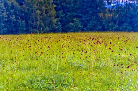 day flowering: Flowering wildflowers in green meadow on sunny day. Stock Photo