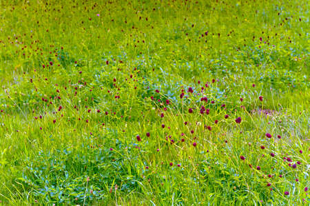 Flowering wildflowers in green meadow on sunny day. Stock Photo