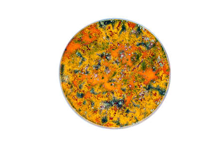 isolated colorful petri dish with yeast and bacteria colonies