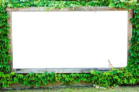 Blank white billboard with overgrown green ivy border Zdjęcie Seryjne