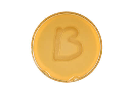 Alphabet made of bacteria escherichia coli culture on LB agar plate - letter b 写真素材