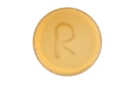 Alphabet made of bacteria escherichia coli culture on LB agar plate - letter r