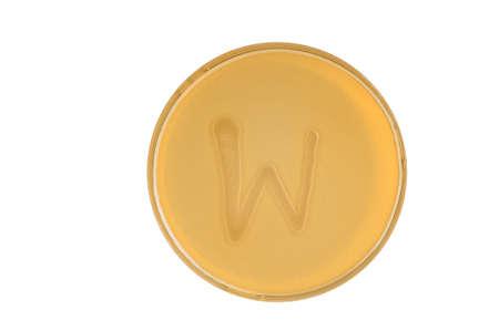 Alphabet made of bacteria escherichia coli culture on LB agar plate - letter w Banco de Imagens