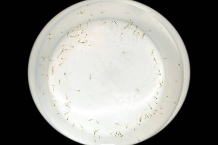 aquascaping: Freshly hatch fish fry and roe shot in plastic container