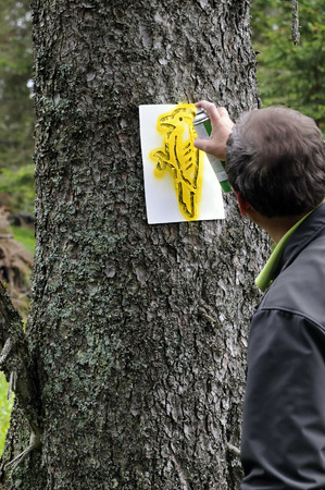 forester: Forester is marking habitat tree