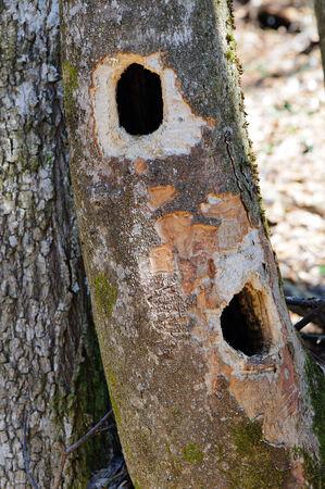 Habitat tree Stock Photo