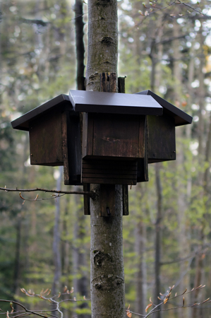 echolocation: Bat houses set on the beech tree in forest. Stock Photo