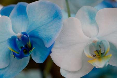Blue and White Orchids Reklamní fotografie