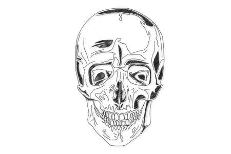 Human Skull structure Stock Photo - 15946293