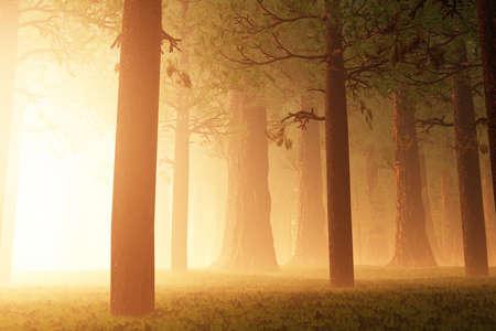 Magic Forest 3D artwork Banque d'images