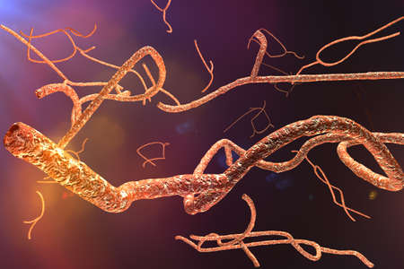 microscopic: Microscopic Ebola Virus 3D render