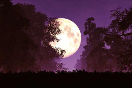 Misterioso bosque mágico en la noche en la luz de la luna ilustraciones 3D Foto de archivo - 37010272