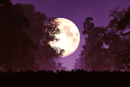 Mysterious Magic Forest at Night in the Moonlight 3D Artwork Stock Photo
