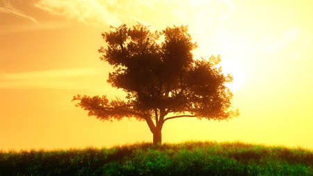 summer field: Lonely Tree on Summer Field in the Sunset Sunrise 3D Illustration