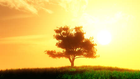 lonely tree: Lonely Tree on Summer Field in the Sunset Sunrise 3D Illustration