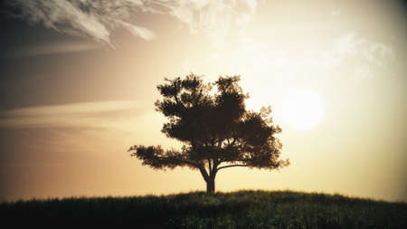 dreamland: Lonely Tree on Summer Field in the Sunset Sunrise 3D Illustration
