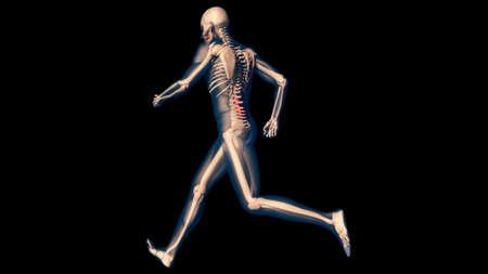 tendon: Lower Spine Pain in Human Body Transparent Design 3D Illustration
