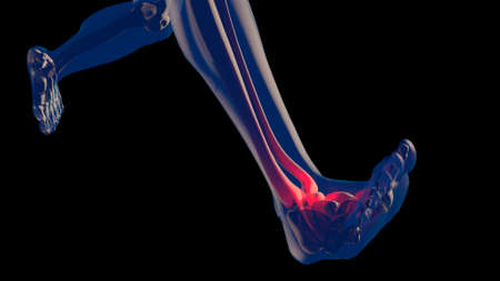 anklebone: Ankle Pain in Human Body Transparent Design 3D Illustration