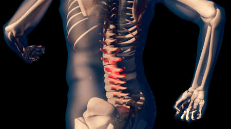 simulations: Lower Spine Pain in Human Body Transparent Design 3D Illustration