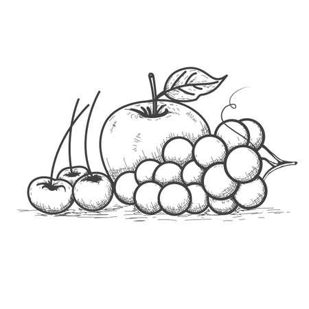 Fruit line art, sketch drawing, coloring