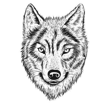 Ilustrador lobo dibujado a mano Ilustración de vector