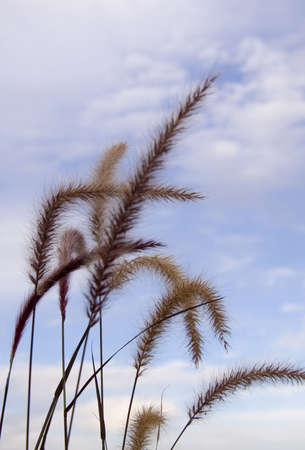 grass against the background of blue sky with clouds